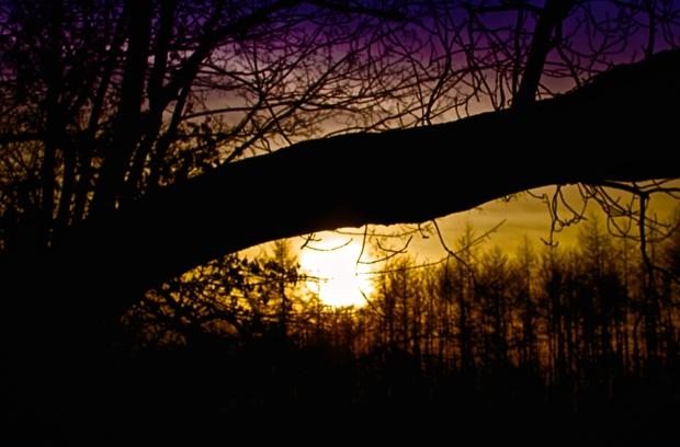 Day 84 - Sunset through the branches